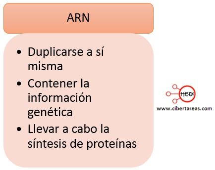funciones del ARN