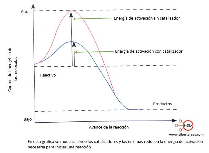 grafica catalizadores enzimas reducen energia activacion