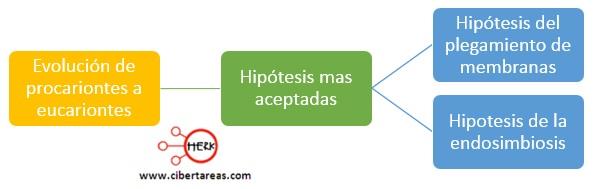 hipotesis de la evolucion de procariontes a eucariontes