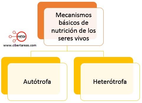 mecanismos basicos de nutricion de los seres vivos autotrofa heterotrofa