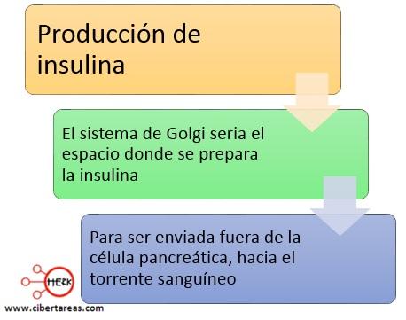 produccion de insulina ejempl del aparato de golgi