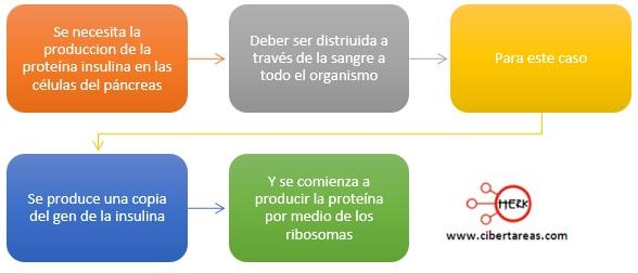 ribosomas ejemplo