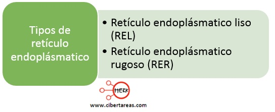 tipos de reticulo endoplasmatico