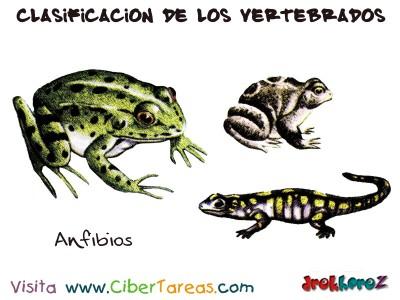 Anfibios - Clasificacion de los Vertebrados