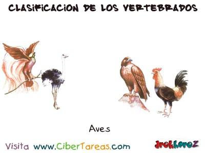 Aves - Clasificacion de los Vertebrados