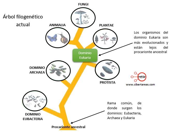 arbol filogenetico actual
