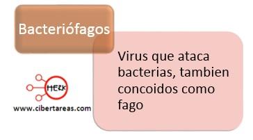 bacteriofagos concepto