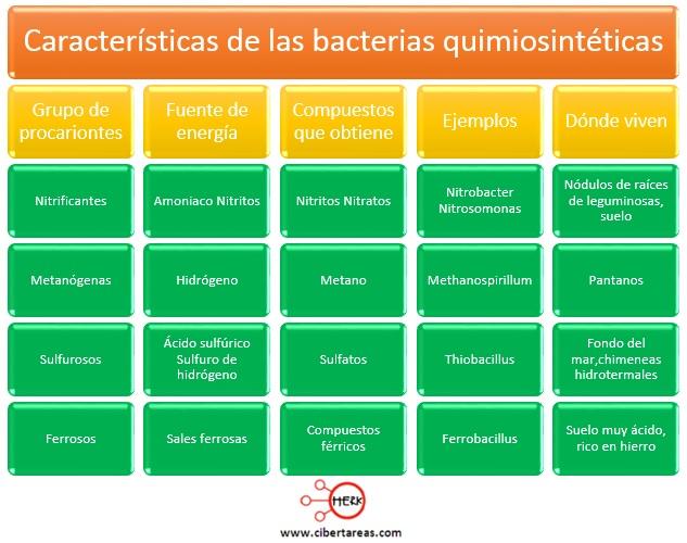 caracteristicas de las bacterias quimiosinteticas