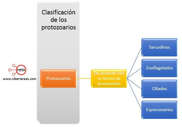 clasificacion de los protozoarios de aceurdo a su forma de locomocion