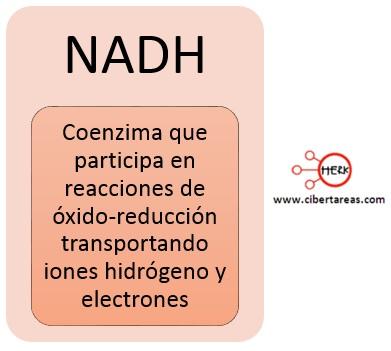 concepto de NADH
