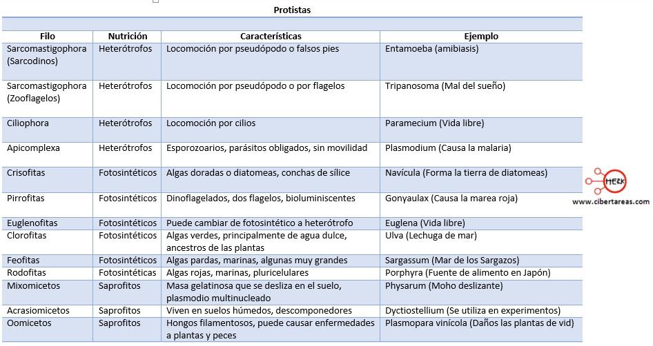 cuadro comparativo sobre los protistas