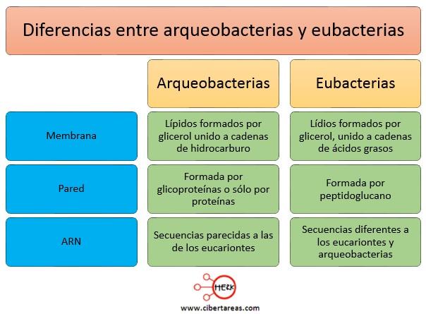 diferencias entre arqueobacterias y eubacterias