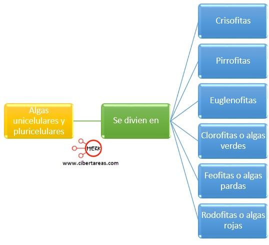 division de algas unicelulares y pluricelulares