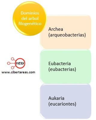 dominios del arbol filogenetico