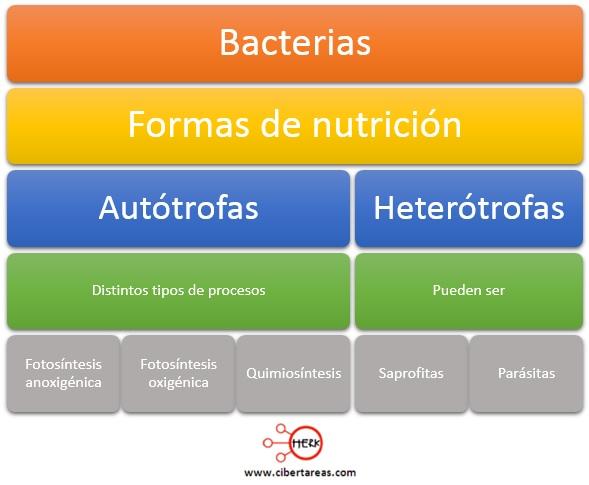 formas de nutricion de las bacterias