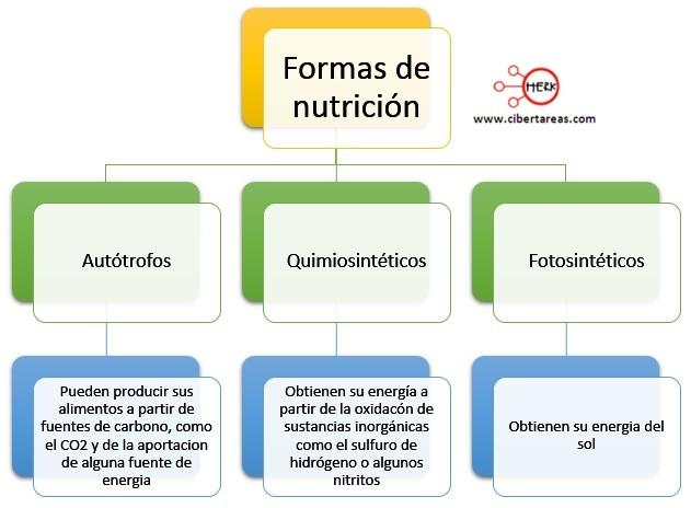 formas de nutricon mapa conceptual