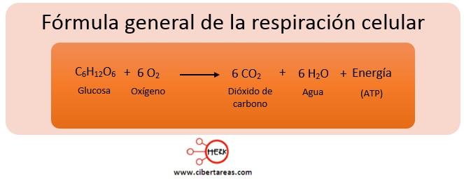 formula general de la respiracion celular
