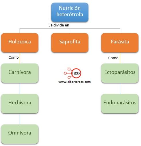 nutricion heterotrofa mapa conceptual