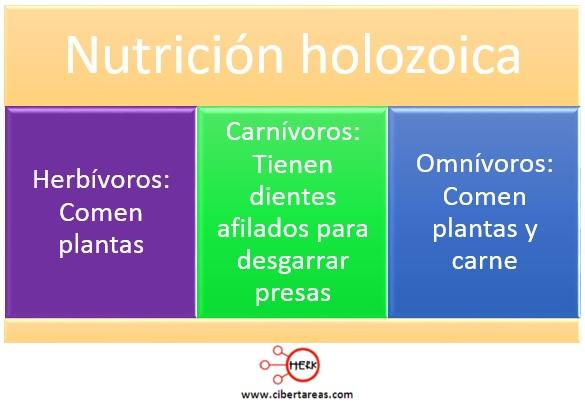 nutricion holozoica mapa conceptual