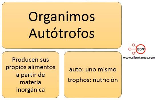 organismos autotrofos nutricion autotrofa