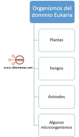 organismos del dominio eukaria plantas hongos animales microorganismos