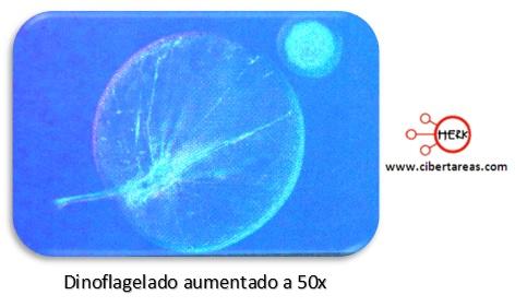 pirrofitas dinoflagelado