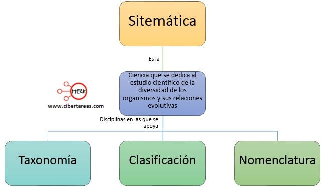 sistematica ciencia concepto mapa conceptual