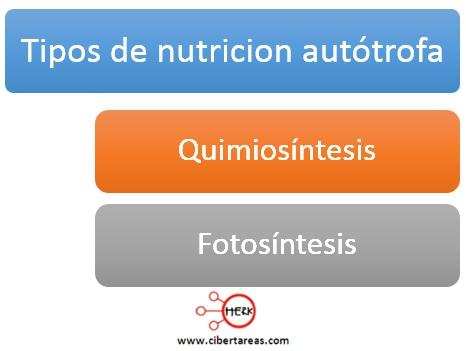 tipos de nutricion autotrofa