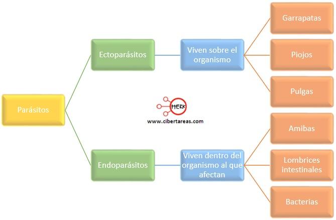 tipos de parasitos ectoparasitos endoparasitos clasficacion de los parasitos