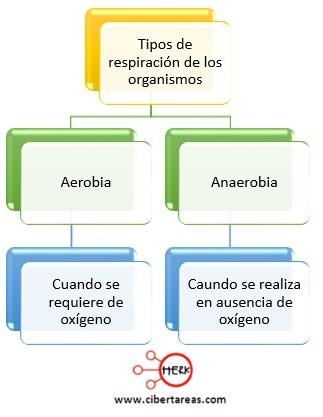 tipos de respiracion de los organismos