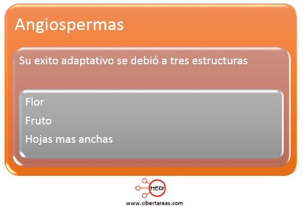 agiospermas caracteristicas