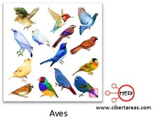 aves reino animalia