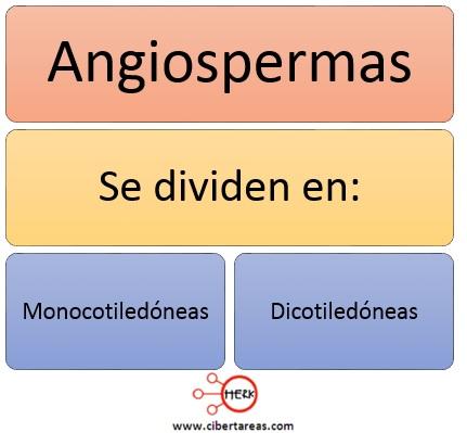 clasificacion de las angiospermas