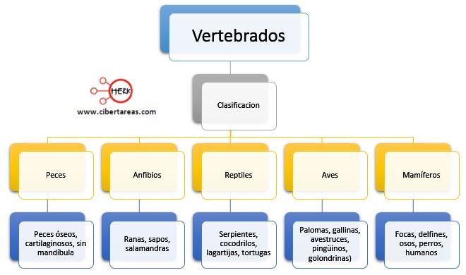 clasificacion de los vertebrados reino animalia