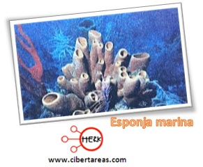 esponja marina reino animalia
