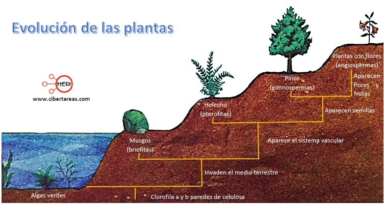 evolucion de las plantas