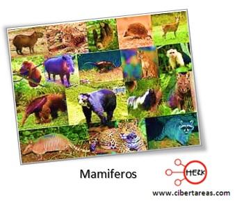 mamiferos reino animalia