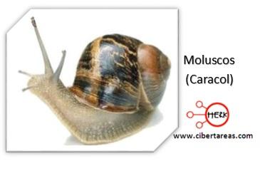 moluscos reino animalia