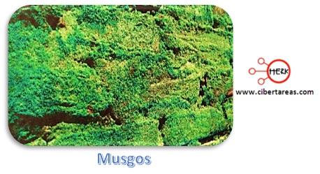 plantas briofitas musgos