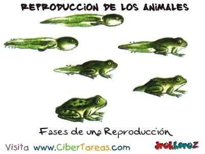 Fases de una Reproduccion - Reproduccion de los Animales