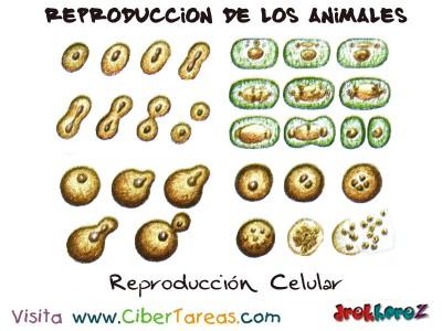 Reproduccion Celular - Reproduccion de los Animales