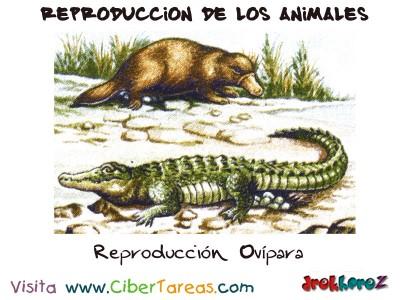 Reproduccion Ovipara - Reproduccion de los Animales
