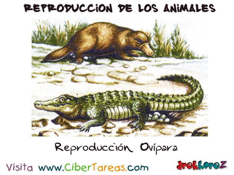 Reproducci n ov para reproducci n de los animales for La reproduccion de los peces