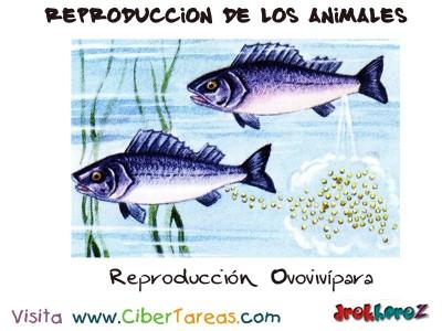 Reproduccion Ovovivipara - Reproduccion de los Animales