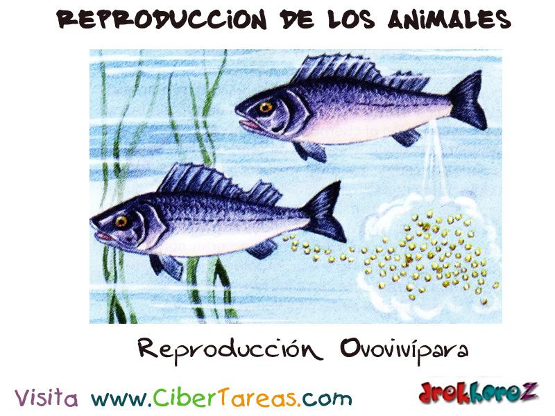 Reproducci n ovoviv para reproducci n de los animales for La reproduccion de los peces