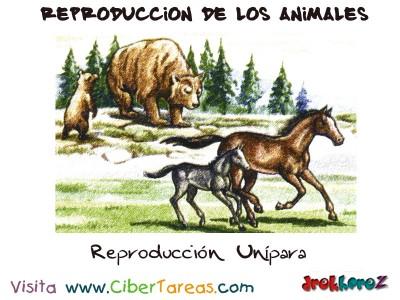 Reproduccion Unipara - Reproduccion de los Animales
