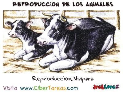 Reproduccion Vivipara- Reproduccion de los Animales