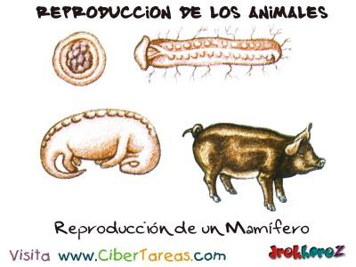 Reproduccion de un Mamifero - Reproduccion de los Animales