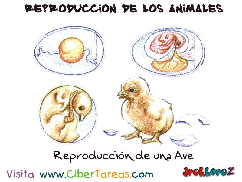 La reproducci n de una ave reproducci n de los animales for La reproduccion de los peces
