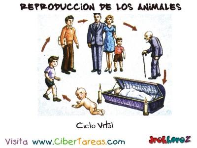 Ciclo Vital - Reproduccion de los Animales